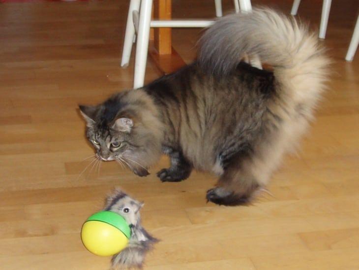 10 очень важных фактов о кошачьем хвосте. Я была в шоке когда узнала ЭТО!