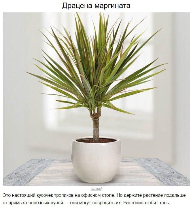 10 растений, которые выживут даже в тени