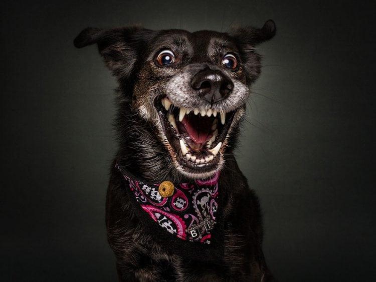 12 фотографий самых смешных псов, которые ловят еду! Сама непосредственность