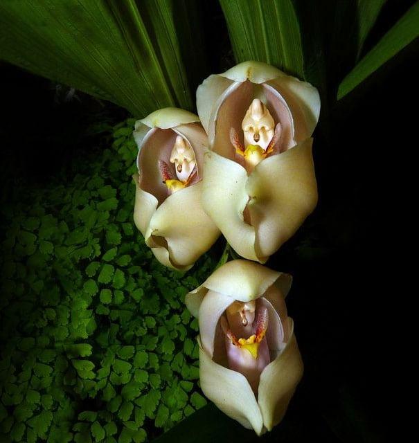 14 невероятных цветков. Вот это красота!