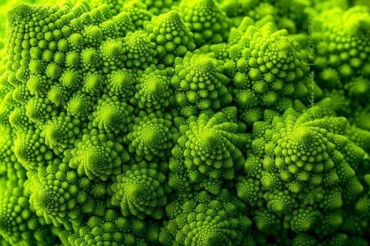 18 геометрических растений