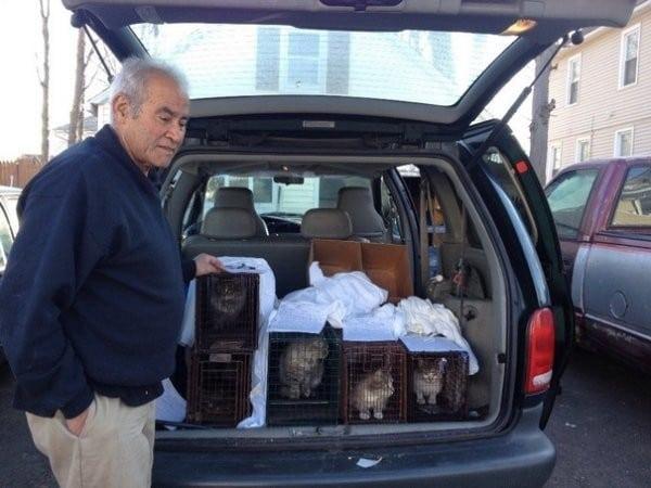 22 года, достойных уважения! Сборщик металлолома каждый день кормит всех кошек в округе