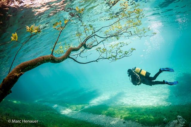 7 удивительных фотографий парка под водой