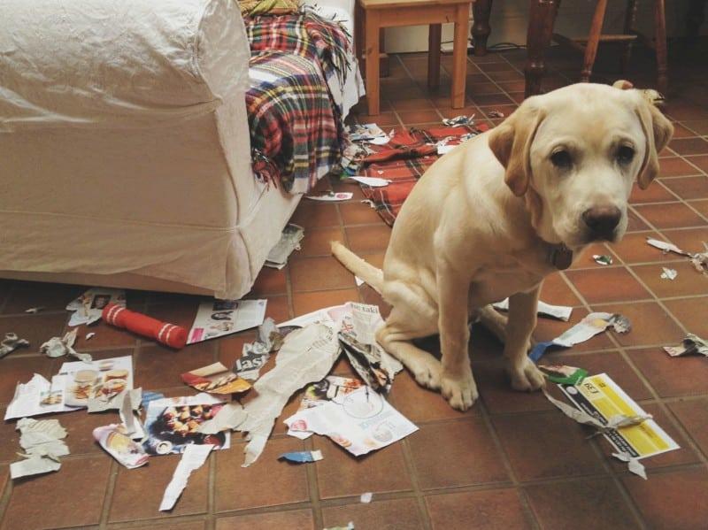 Чем занимаются собаки, когда вас нет дома. Смешная подборка