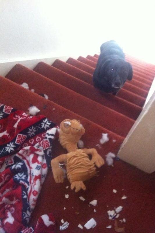 Чем занимаются собаки, когда вас нет дома?