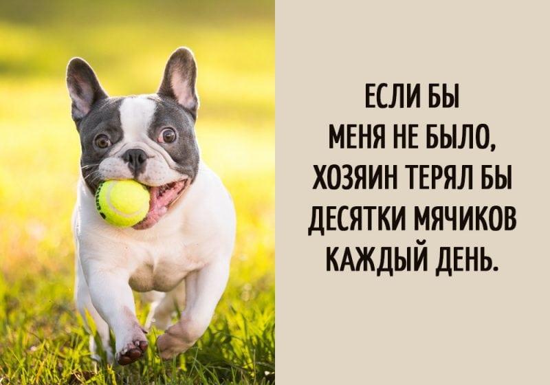 Если бы собаки могли говорить… Такие мысли наверняка посещали каждого пса!