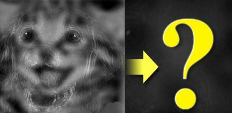Кого вы здесь видите: кота или собаку? И вот что это значит!