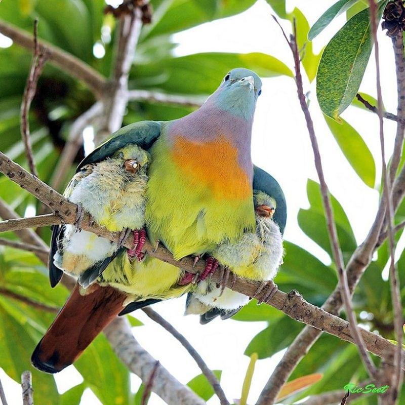 Мамы и их детки: путешествие по дикой природе