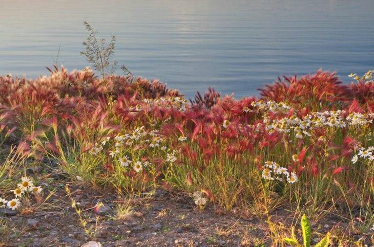 Побережье моря Лаптевых. Природная красота!