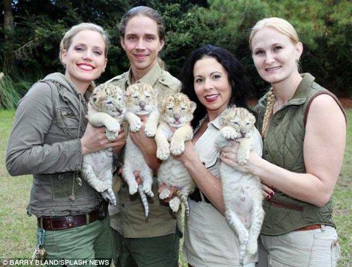 Потомство белого льва и белой тигрицы. Нереально красивые малыши!