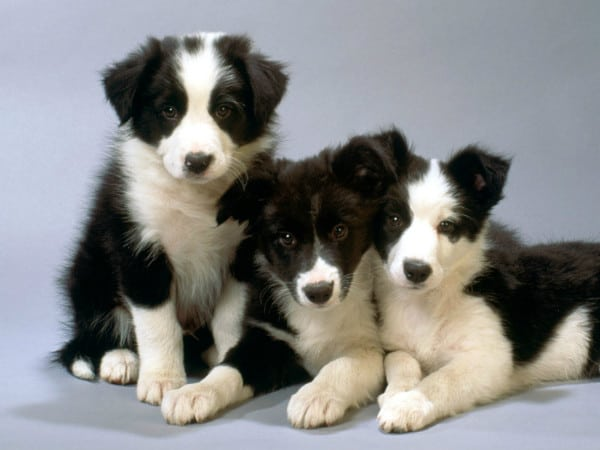 Собаки шпионы - гении маскировки! Я плакала от смеха!