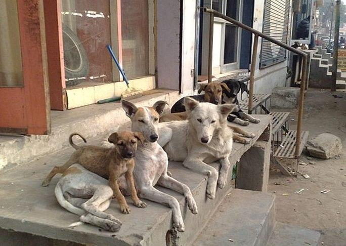 Стая бездомных собак спала девочку от насильника!