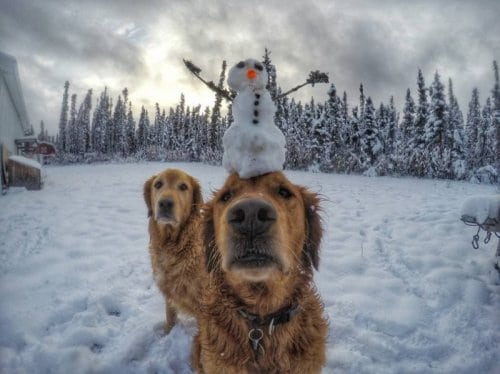 Дантист из Аляски и его забавные животные покорили интернет