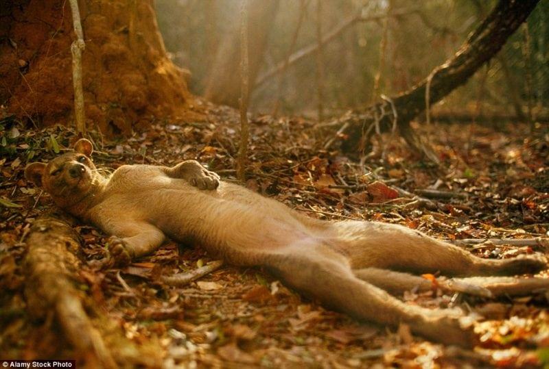 Там на неведомых дорожках следы невиданных зверей: самые необычные животные нашей планеты
