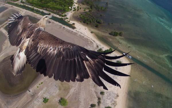 Увидеть мир с высоты птичьего полета... Это превосходит человеческие возможности