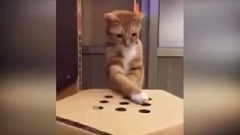 Забавная игра, которая 100% понравится кошкам!