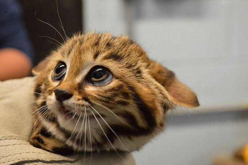 12 фотографий котов, которых вы точно никогда не встречали. Хотели бы себе такого?