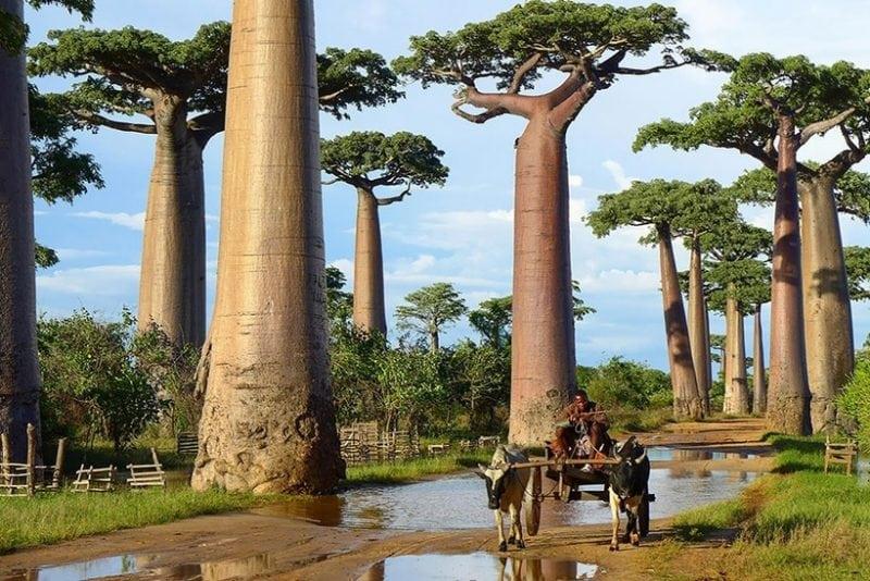 16 необычных деревьев поражающих воображение