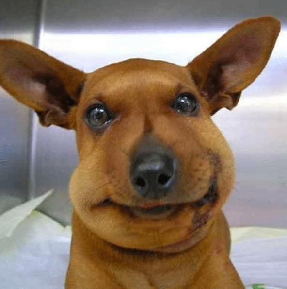 17 трогательных фотографий псов, которые поймали пчелу