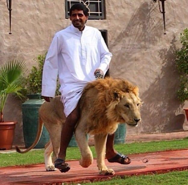 Такое вы встретите только в Дубаи! 20 удивительных фотографий