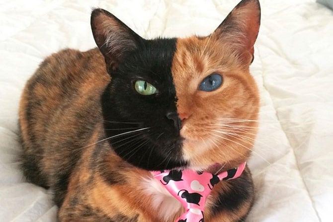 22 фотографии кошек, которые имеют самый красивый окрас в мире!