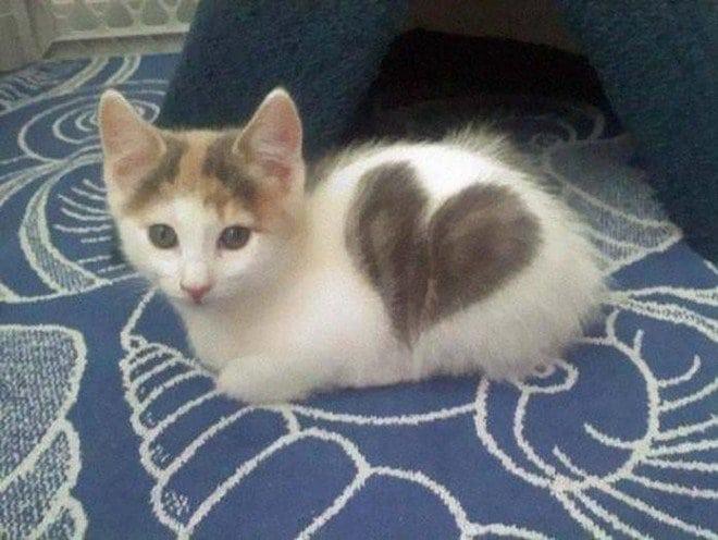 20 фотографий кошек, которые имеют самый удивительный окрас в мире!