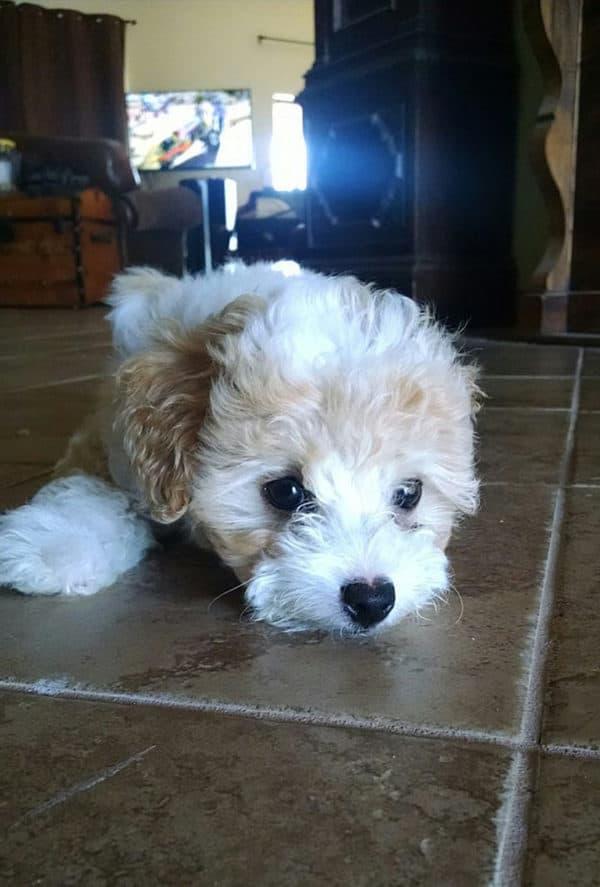 25 милейших фотографий маленьких щенков! Порция позитива!
