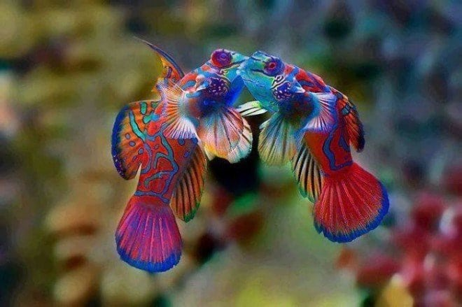 40 восхитительных животных невероятного окраса! Такого я еще в своей жизни не встречала!