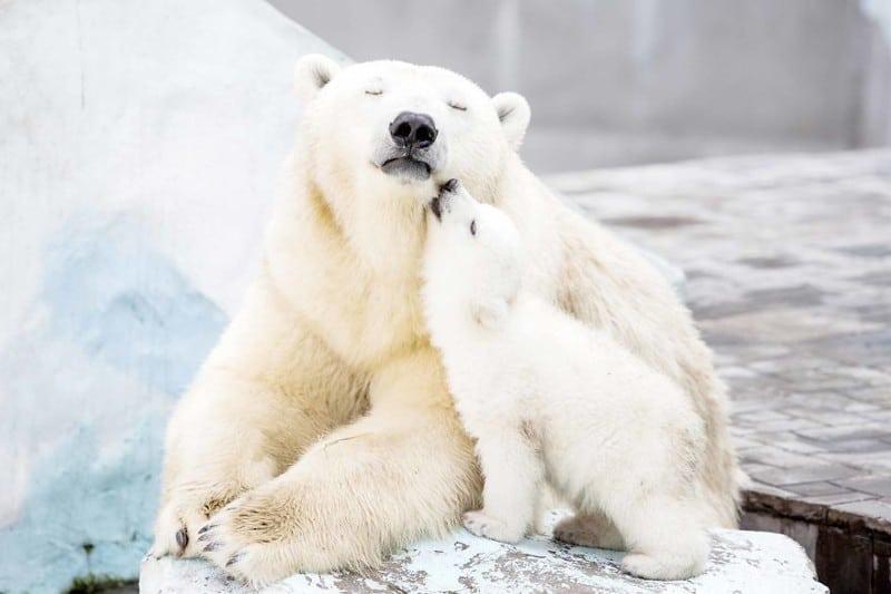 55 трогательных фотографий медведиц и медвежат. Милость зашкаливает!
