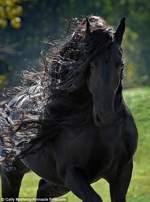 Черный конь удивительной красоты. Прекрасные фотографии