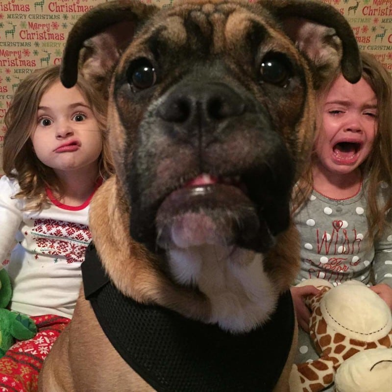 Смешные картинки про животных и про детей