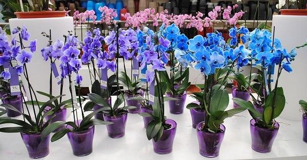 Как правильно рассадить орхидею? Полезный лайфхак!