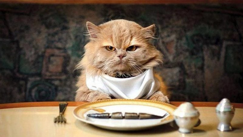 Кот, который много жрал. Самая ироничная и милая история про кота Борзеля