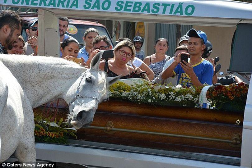 Лошадь плакала на похоронах хозяина... Поразительная преданность...