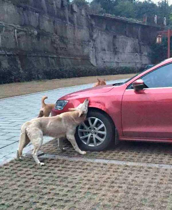 Он вышел из машины и пнул старого пса, но собака подготовила план мести...