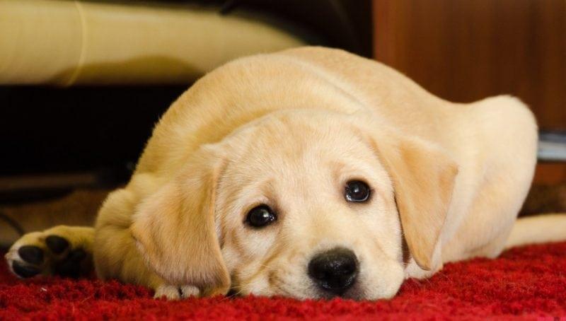 Почти 50.000.000 просмотров! Собака съела кошачий корм, только посмотрите на её выражение лица!