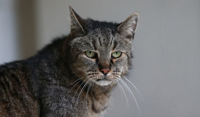 Самому старому коту на планете исполнился 31 год! Давайте вместе поздравим его!