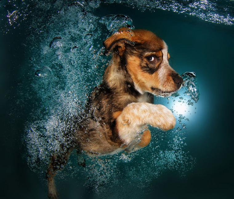 Собака устроила вечеринку в бассейне! Смешное видео