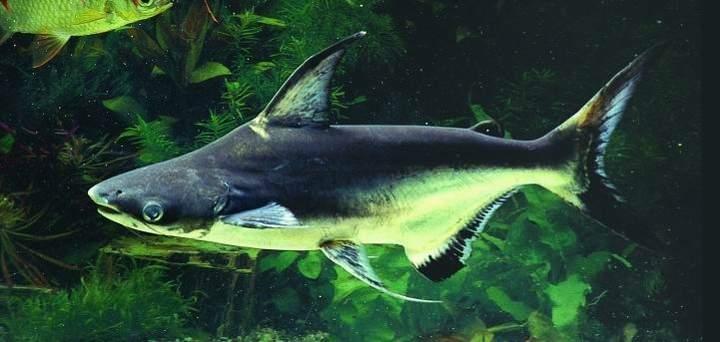 Специалисты предупреждают, что ЭТА рыба опасна для здоровья!