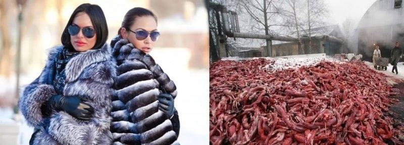 Вот что вы носите на своих плечах зимой! Бедные животные!
