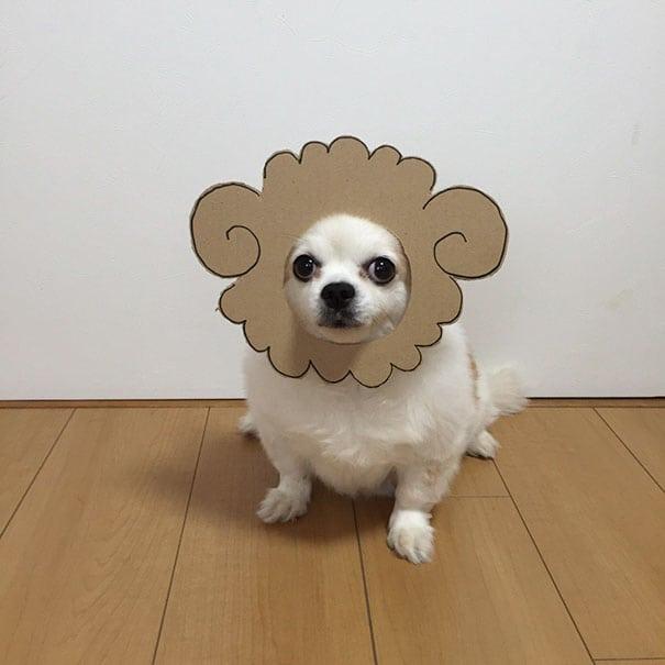 Жительница Японии фотографирует свою собачку в забавных и милых образах. Только посмотрите на эту милашку
