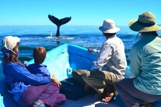 Люди спасли кита от верной гибели, посмотрите КАК он их отблагодарил