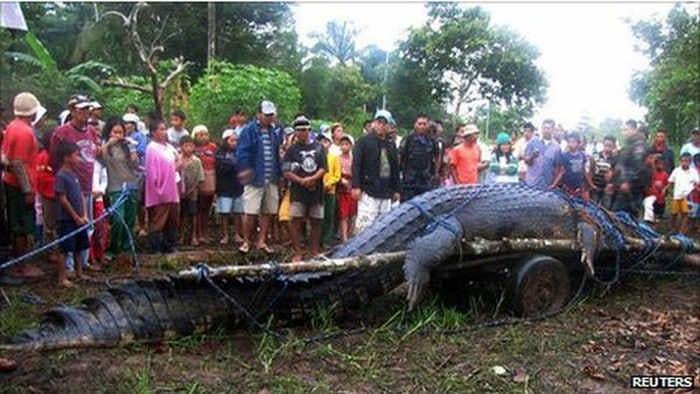 10 нереально огромных животных. Удивительно!