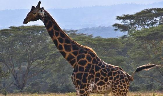 10 самых редчайших животных во всем мире
