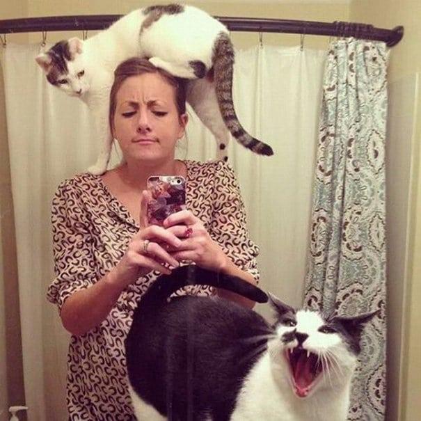 15 фотографий наглых, но таких милых котиков