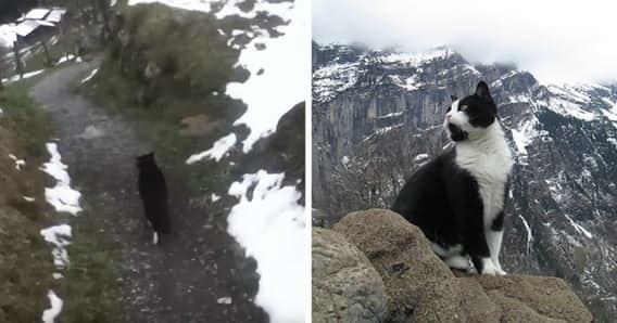 15 котов героев, которые спасли жизнь своим хозяевам