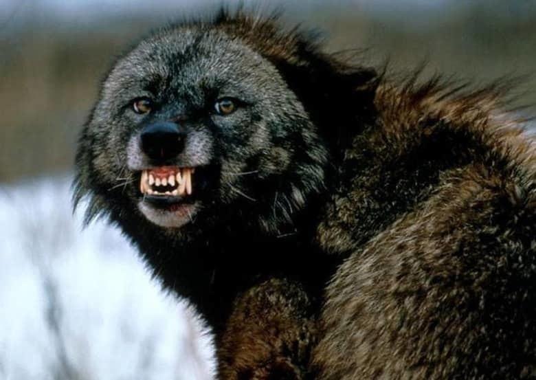 15 самых опасных и жестоких существ в мире. От них лучше держаться подальше!