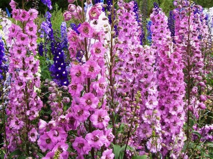 15 самых опасных цветов в мире