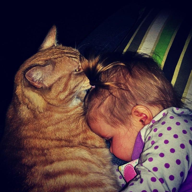 20 фотографий котиков и деток