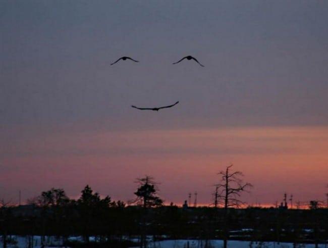 23 добрых фотографии, которые подарят вам улыбку на весь день!